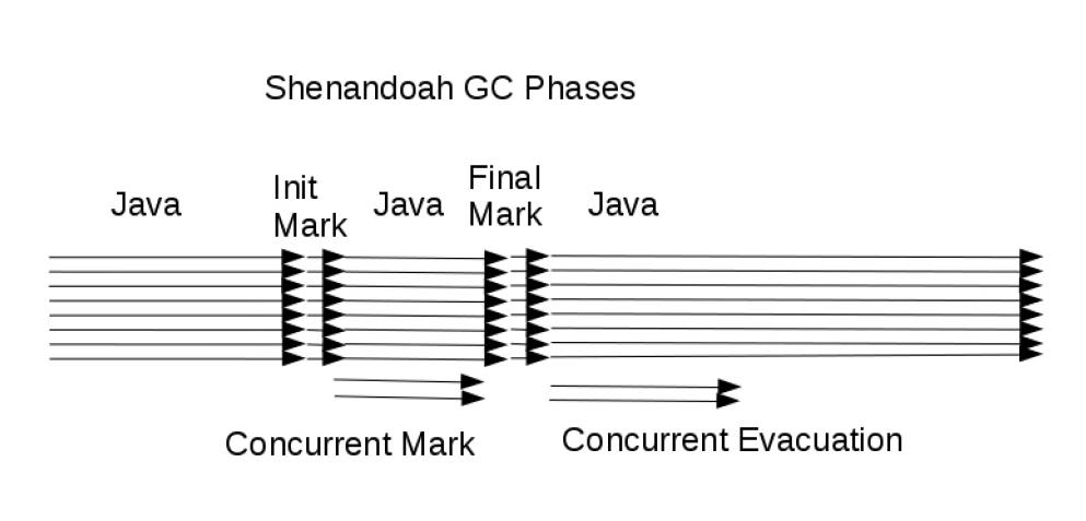 shanandoah_gc_phases
